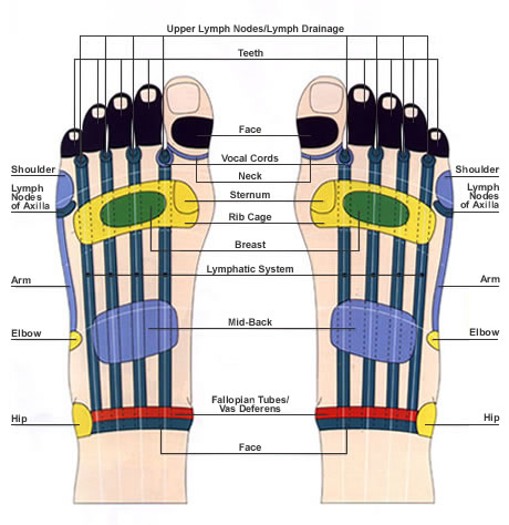 a history of reflexology Reflexology, also known as zone therapy, is an alternative medicine involving application of pressure to the feet and hands with specific thumb, finger, and hand techniques without the use of oil or lotion.