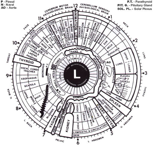 Iridology Also Called Iris Ysis Or Diagnosis Is The Study Of Colored Part Eye Readings Are Made By Iridologists To